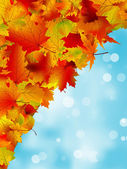 Autumn leaves on blue sky. EPS 8 — Stock Vector