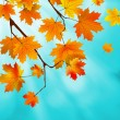 Red and yellow leaves against blue sky. EPS 8 — Stock vektor
