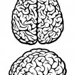 Brain. Top and side views — Vector de stock