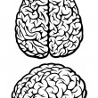Brain. Top and side views — Stockvectorbeeld