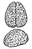 Brain. Top and side views — Stock Vector