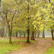 Road among trees in misty autumn park — Stock Photo #6002668