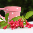 Pink, Spring flowers and a cup — Stock fotografie