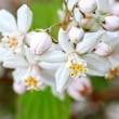 Spring flowers close up — Foto Stock