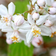 Spring flowers close up — Stock fotografie