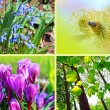 Spring flowers montage, horizontal — Stock Photo