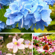 Collection of Summer flowers — Foto de Stock