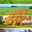 4 seasons collection — Stockfoto