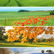 4 seasons collection — Stockfoto #6364825