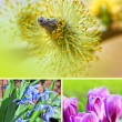 Spring flowers montage, vertical — Stock Photo