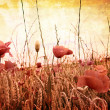Beautiful grungy background with poppies — Stock Photo