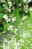 White flowers petals on the grass — Stock Photo