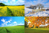 4 seasons collection — Stock Photo
