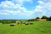 Beautiful scenery with cows and hills — Foto Stock