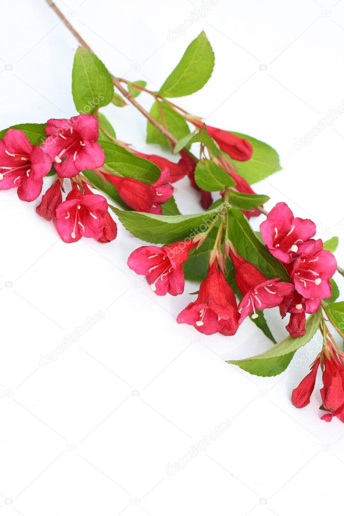 Pink, Spring flowers on a white bench with copyspace — Stock Photo #6363412