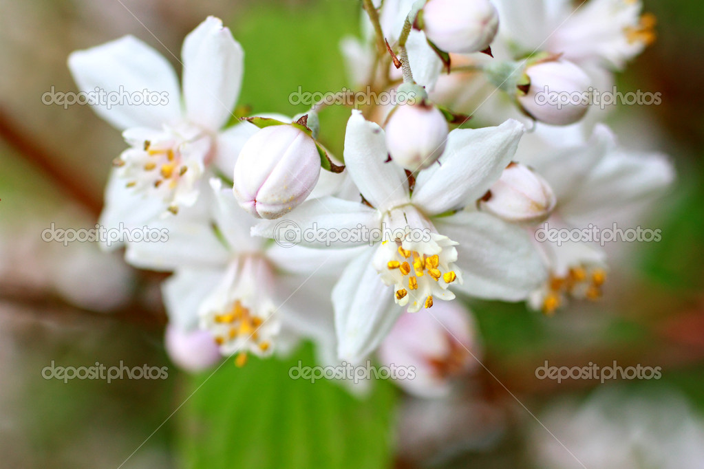 Spring flowers close up  Stock Photo #6364411