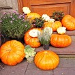 Pumpkins display — Stock Photo #6376605
