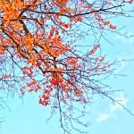 Beautiful autumn background — Stock Photo #6376719