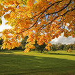 Beautiful Autumn in Scotland — Stock Photo #6376750