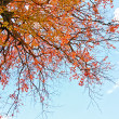 Beautiful autumn background — Stock Photo #6376788