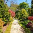 Beautiful Spring garden - Stockfoto