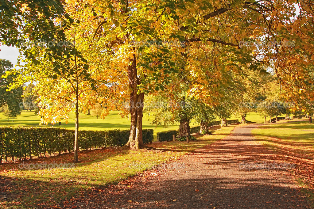 Beautiful Autumn in Scotland, chestnut trees close up  Stock Photo #6376768