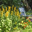 Beautiful, old garden with a deckchair — Stock Photo