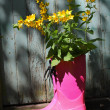 Pink wellingtons in front of an old shed — Stock fotografie
