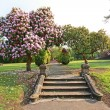 Beautiful azalea tree with old steps — Stockfoto