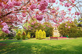 Blooming pink cherry tree in the park — Stock Photo
