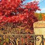 Autumn in Scotland — Stock Photo #6411276