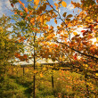 Beautiful autumn in Scotland — Stock Photo #6411425
