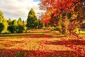 Herfst in schotland — Stockfoto