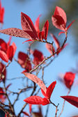 Beautiful autumn in Scotland — Stock Photo