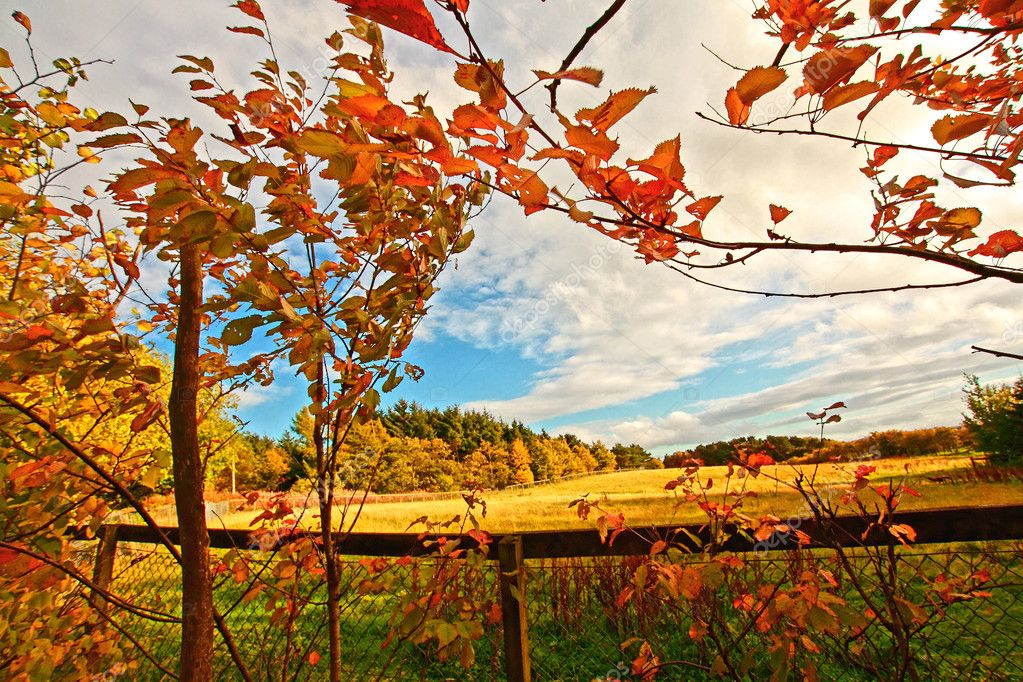 Beautiful autumn in Scotland, October — Stock Photo #6411347