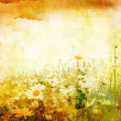 Beautiful grunge background with daisies — Zdjęcie stockowe