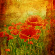 Beautiful vintage background with poppies — Stock Photo