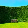 Garden hedges with a bench - Stockfoto