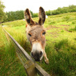 Donkey in the park - Stock Photo