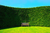 Garden hedges with a bench — Stok fotoğraf