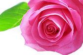 Krásné růžové růže blízko — Stock fotografie