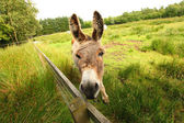 Donkey in the park — Stock Photo