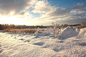 Beautiful wintery landscape — Stock Photo