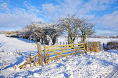 Winter in Scotland — Stock Photo