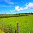 Summer landscape with wooden fence — Stock Photo