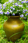 Pretty blue flowers in the golden vase — Stock Photo