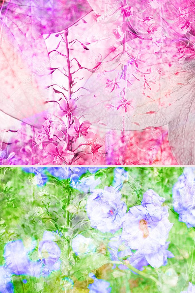 Beautiful floral background  Stock Photo #6605447