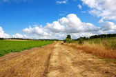 Rural road in the fields — Stock Photo