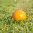 Croquet ball — Stock Photo #5681598