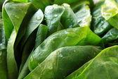 Green fresh spinach — Stock Photo